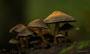 Pilze - Mushrooms (5)