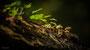 Pilze - Mushrooms (7)