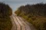 Helgoland - Kegelrobben - Dünenweg