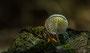Pilze - Mushrooms (59)