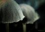 Pilze - Mushrooms (2)