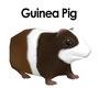 Guniea Pig