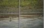 Teichwasserläufer 12.4.12 Waghäusel (c) C. Steinkamp