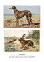 Greyhound 1 (repro planches d'un livre illustré par Malher, coll. Manializa)