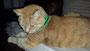 Theodor mit KingLuy Single Armband :)