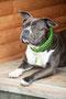 Emma mit KingLuy Paracord Hundehalsband