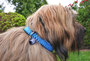 Filou, Lucy, Marlie mit KingLuy Paracord Hundehalsband
