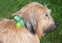 Filou, Lucy, Marlie mit KingLuy Paracord Halsband