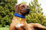 Malou mit KingLuy Paracord Hundehalsband