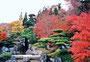赤く染まる豆子郎庭園―'山口の庭'に選ばれています