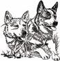 04255 Cattledog