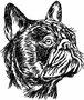 03580 Franz. Bulldogge