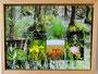 Fotocollage Darss Urwald 2012 30x40 cm Preis 70,- €