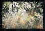 Lichtspiegelung im Hellbachtal, 2016, Fotothek im Holzrahmen, Preis 70,- € inkl. Porto