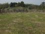 こんな湿原にヒメヒカゲがいます