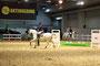 Shagya-Araber Rassepräsentation Pferd & Jagd 2017