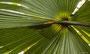 ein Palmenschirm