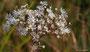 --- und Blumen im Hochmoor Rothenthurm