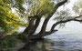 über 500 verschiedene Arten von Laub- und Nadelbäumen