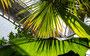 Lichtspiele im Palmenhaus