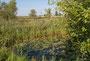 Frosch- und Seerosenteich in Hinwil