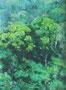 新緑 アクリル0号 実物はもっと色が良いのですが。県展作品のきっかけになった作品