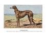 Greyhound 2 (repro planche d'un livre illustré par Malher, coll. Manializa)