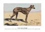 Sloughi 5 (repro planche Livre illustré par Malher, coll. Manializa)