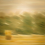 Strohbinkel / 2017 / Öl auf Leinwand / 80x80cm