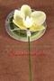 """Anstecker """"Orchidee"""" für den Bräutigam"""