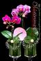 """Tischdeko """"Orchidee"""""""