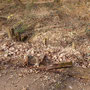Abgefaulte Holzpfosten