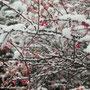 Binnen kürzerster Zeit war die Umwelt in winterliche Farbe getaucht.
