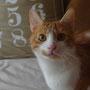 Mel adopté le 11 Juin 2016