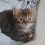 Elsie 2 mois adoptée le 21 Juin 2016