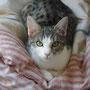 Loupiotte (6 mois), adoptée le 11 avril 2014