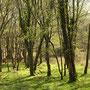 Réserve naturelle régionale de Lan Bern en Bretagne.