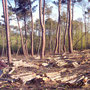 exploitation forestière du châtaignier