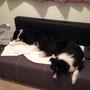 Müde Hunde :)