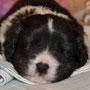 Mi Cosita Bandido - 3 Wochen alt
