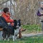 Lexi und Hunde werden bewundert