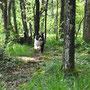 Shiva saust durch den Wald