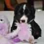Mi Cosita Bella - 3 Wochen alt