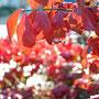 Herbstimpressionen - gesehen auf einem Spaziergang in Norden/Ostfriesland