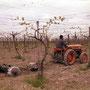 Fiat 241R DT Traktor (Quelle: Centro Storico Fiat)