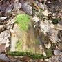 Spuren vom Gewöhnlichen Nagekäfer (Holzwurm) - Foto: M. Protto