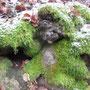 Krücken-Kurzbüchsenmoos (Brachythecium rutabulum) - NSG Sondertal-Talgraben Bad Wildungen 04.12.14 - Foto: B. HANNOVER