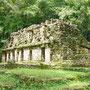 Die Maya-Ruinen von Yaxchilan