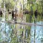 Okefenokee Swamps