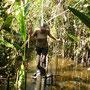 Baumstämme dienen als Weg über das Wasser